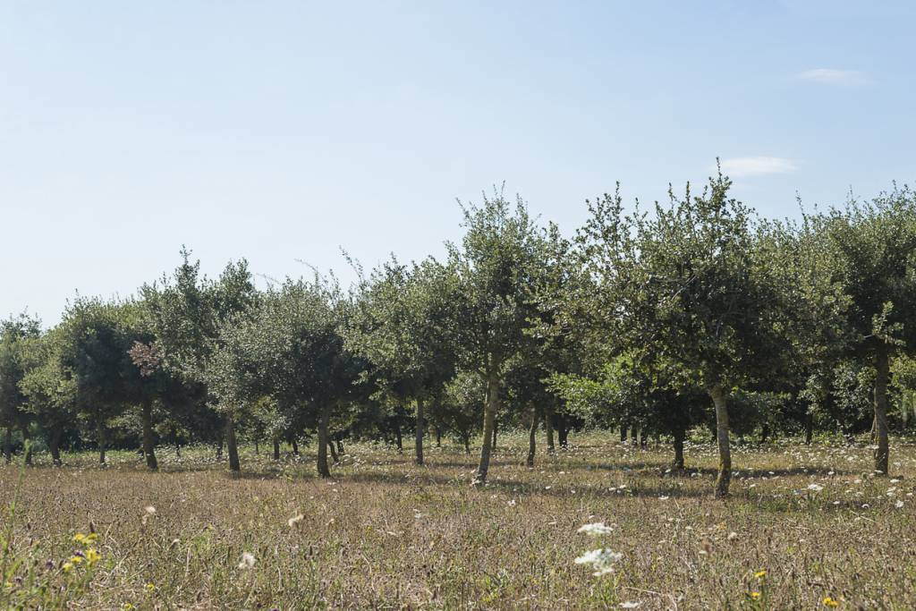 arbres truffiers