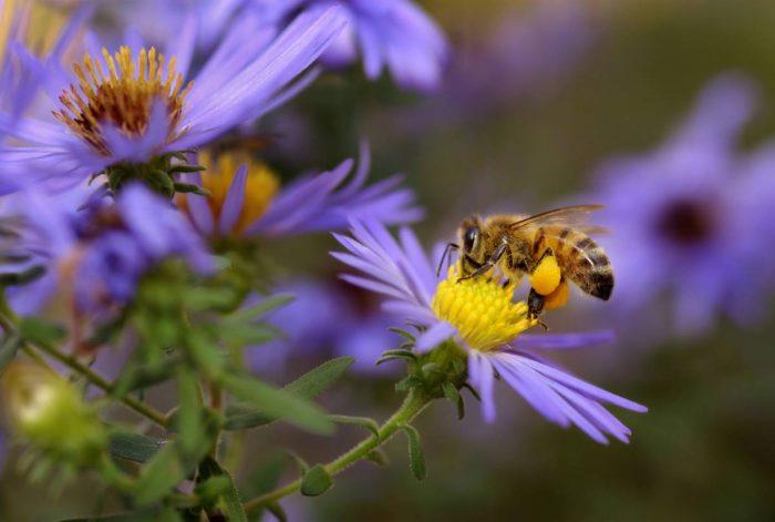Pollinisation en souffrance