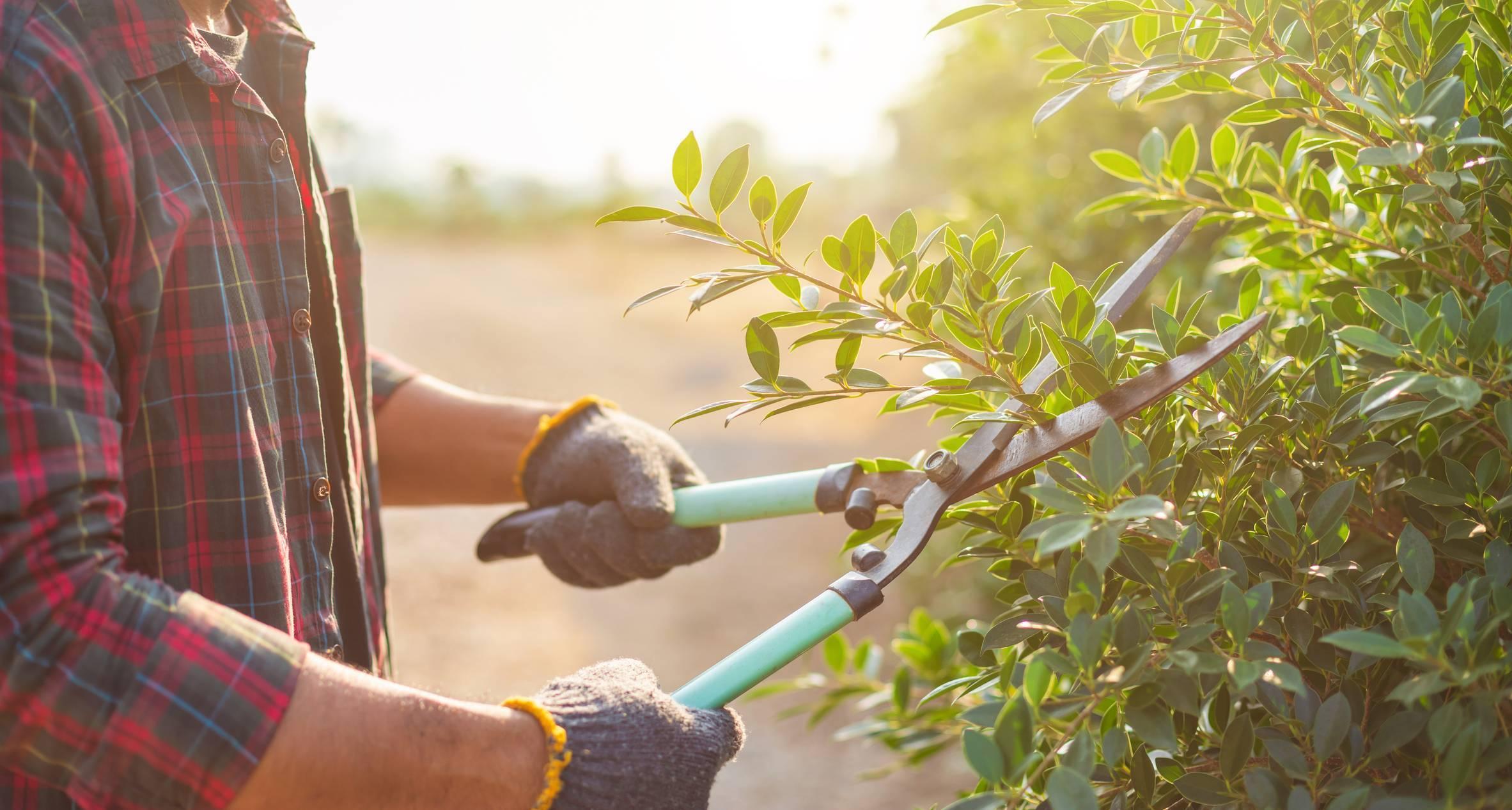 Réduction fiscale jardinage