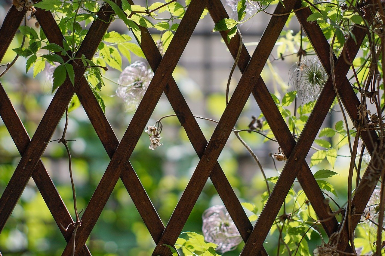 Treillis jardin