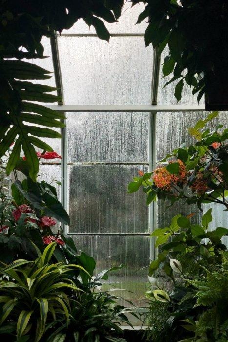 Acheter une serre de jardin